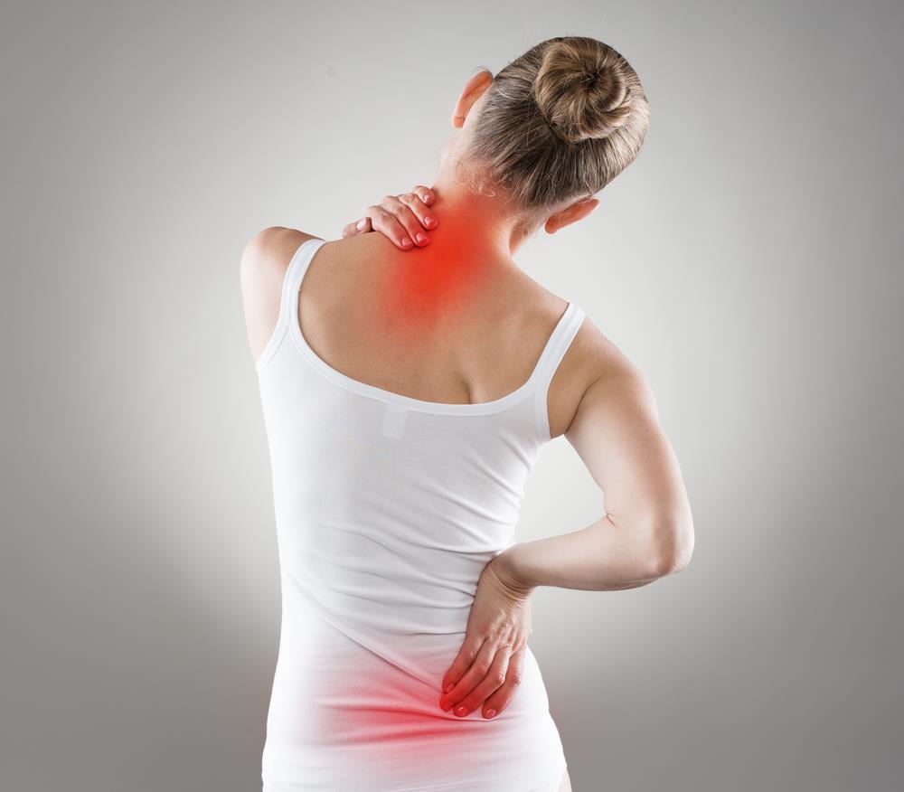 système ostéoarticulaire